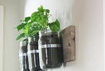Gardening & Growing / by girl*in*gear studio