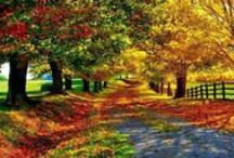 Autumn / by Morning Glory Meadow