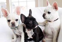 Pet Love / by Joycie Weatherby | jdweatherby