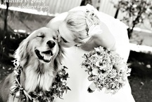 wedding fantasies / by Katie Harris