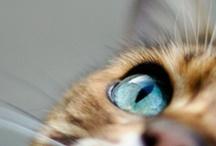 Cats / by Lara Kao