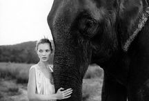 Anything not about elephants is irrelephant. / Guess what my favorite animal is? / by Kiara Méndez