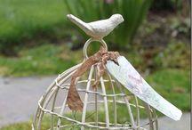 ~ Birdie, Birdie, Birdie ~ / by Loni R Colin