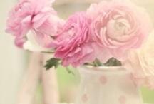 ~ Cinderella Think Pink ~ / by Loni R Colin