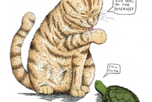 Cats & Turtles / Cats & Toidles / by Four The Lawls