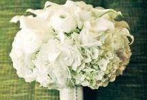 Wedding / by Angela Long