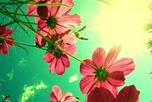 Flowers bloom / Lady Bird Johnson / by Annabel Hou