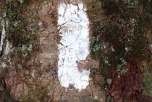 Appalachian Trail / Been there, done that. 2013 Thru-hiker! / by Rabbit Ridge Farm (Jordan Charbonneau)