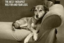 Love dogs! / by Lynn Matthews