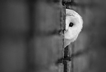 Fine Feathered Friends / by Michelle Ray Viscal