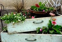 Gardening / by Melissa Freiburger