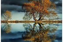 Reflections / by Chloe Patton