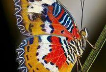 Butterflies, Moths & Dragonflies / by Chloe Patton