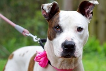 Rescue Dogs of the Week / Dogs available for adoption through shelters or rescue groups / by Stubby Dog