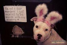 Oopsies! / by Stubby Dog