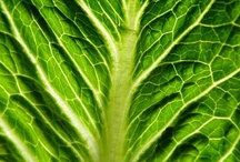 """Leafy Green Vegetables / Green foods go hand in hand with the """"green"""" movement.  Eating green foods like kale, collards, algaes, seaweeds and wild edible greens are a way to help cleanse the liver and detox the body.   The liver loves the green chlorophyll-rich color that helps to eliminate harmful toxins from the body and blood. / by Superfoods for Superhealth"""