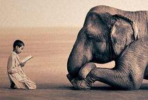 Elephants = true love / by Katy Atkinson