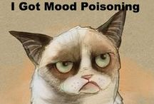 My Sentiments Exactly!! Tard the Grumpy Cat!! / by Christy Campbell