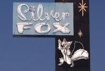 Silver Fox / by Sarah Thomson