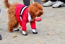 Doggie Costumes  / by De Vonee Kaiser