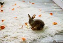 Bunny board / by Milla