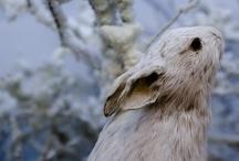 animals and nature / by Helene Ekblom