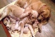 Puppies / Puppies of all different breeds, shapes, and sizes, and all kinds of cute! / by Pets Insure Together