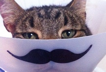 Cat Humour / by Pets Insure Together