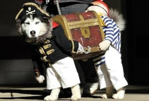 Fancy Dress Pets / by Pets Insure Together