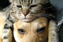 Cats & Dogs Together / by Pets Insure Together