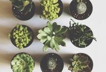 grow / by blake humphrey