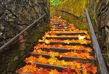 Remarkable Stairway / by Leita Laird