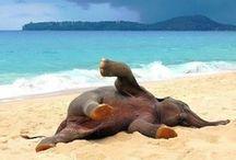 My love for elephants / by Devon Rountree