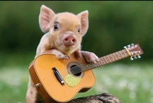 This Little Piggy.... / by Maria Newell
