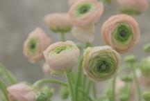 La Fleur / by Nicole D. Whetzel