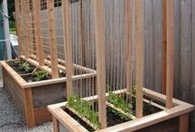 Vegetable Garden....Planting, Caring & Other Ideas... / by Latitia Leishman