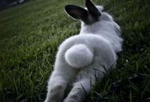 I love bunny butts! / by Cathy Garcia
