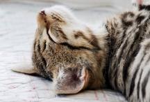 Cats / by Boho Weddings & Life