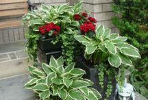 "Garden  "" P's "" / Plants, planters, pots, perennials / by Lorraine Vallis"