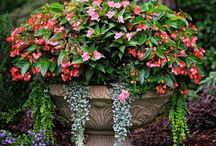 GARDENING - CONTAINER / (Garden and Gardening Ideas on separate board) / by Barbara McKinney
