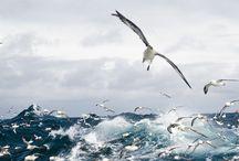seaside / saltwater dreams / by ciscolo