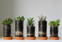 Fun Office Plants / by Marketing For Breakfast