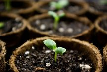 Gardening/Farming / by Maygon Styles