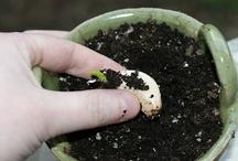 Simple Living / Gardening / Homesteading / by Faith
