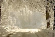 Winter Wonderland / by Julie Dewald