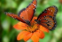Flutterbys / by Phyllis Zart
