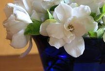 Fleurs et Jardins / by Barbara Williams