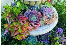 Gardening / by Anne Martin