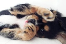 Perfect Pet / See 'An animal a day' Pinterest board for non-domesticated animal photos. / by Killer Aesthetic