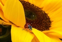 Insects & Animals / Insects and animals; no discriminating... They're all cute! / by Terry Jobs